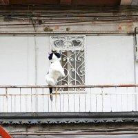 Как правильно сушить кота :: Эрик Делиев