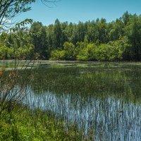 У реки. Протока Оби в окрестностях Новосибирска. 24 июля 2014г. Sony DP2 Merrill :: Vadim Piottukh