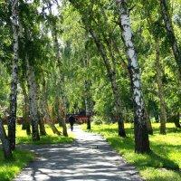 Старые берёзы в парке :: Александр Садовский
