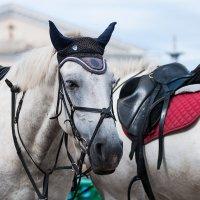 Ухтинские лошадки :: Viktoria Intrada