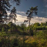 Лесные опушки :: Михаил Александров