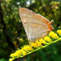 Нарядная бабочка! :: Наталья