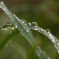 После дождика, в эту пятницу... :: Федор Кованский