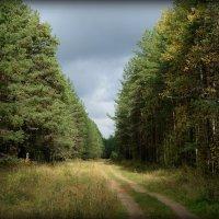 Лес в сентябре. :: Андрей Русинов
