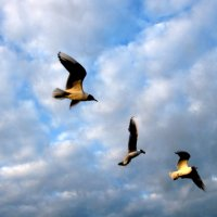 Чайки :: An-na Salnikova