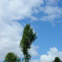 Жизнь на ветру :: Андрей Устюжанин