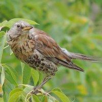 Грозный птах. :: Геннадий Александрович