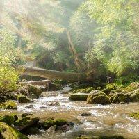 Третья речка-Ойрок(Телецкое озеро) :: Жанна Мальцева