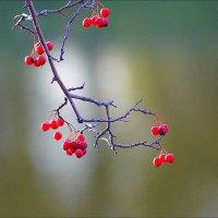 Природа, как живопись... :: Igor Khmelev
