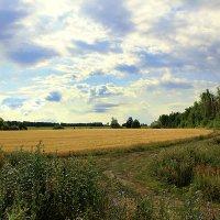 На краю поля :: Эркин Ташматов