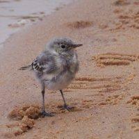 Птичка :: Анна Елтышева