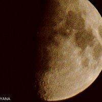 Луна :: Яна Андрущенко