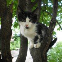 Древесный котейка :: Наталья Тимошенко
