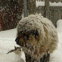 Пёс- снеговик :: Сергей Босов