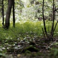 Под деревьями :: Андрей Качин