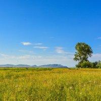 Летние травы :: юрий Амосов