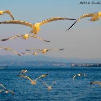 Золотые чайки :: Вадим Кудинов