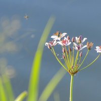 Цветок у берега :: юрий Амосов