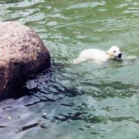 Маленький белый медведь (300 парк) в Санкт-Петербурге :: Дарья Егорова
