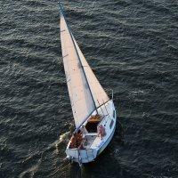 Летящая по волнам :: Юрий Муханов