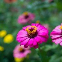 цветы :: Анастасия Садовская