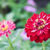Не знаю название цветочка :: Антон Тихонов