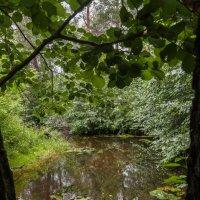 Лесной ручей :: Евгений Мельников