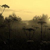 Утро туманное... :: Елена Байдакова