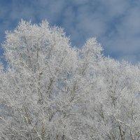 Зима однако :: Дионисий Великий