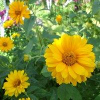 Цветы солнечного июля... :: BoxerMak Mak