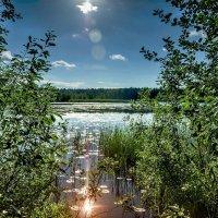 Забельское озеро :: Михаил Александров