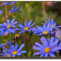 Голубые звезды :: Vanda Kremer