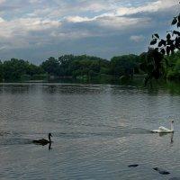 Prospect Park :: Игорь Липинский