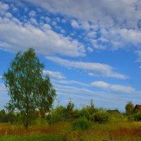 Во поле берёза... :: Юрий