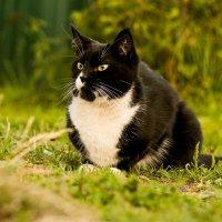 Серьезный кот :: Александр Кузнецов