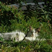 кошка под рябиной. :: лена палюшина