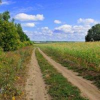 Между лесом и полем :: Эркин Ташматов
