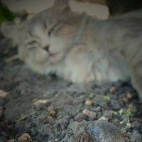 Кошка с мышкой :: Ольга Нестерук