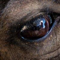 Глаза-зеркало души... :: Оксана Артюхова
