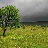 В лес за грибами в ненастную, дождливую погоду. :: Пётр Сесекин