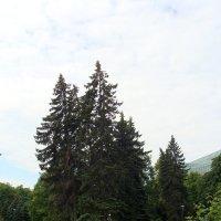 Парк Шнелли :: laana laadas