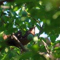 Птичка среди ветвей :: Aнна Зарубина