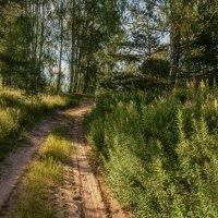 Лесные дорожки_а :: Михаил Александров