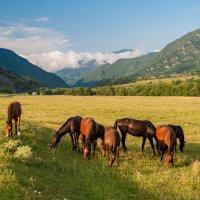 в горах Кавказа :: Евгений Khripp