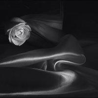 Белая  роза. :: Валерия  Полещикова