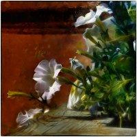Уличные цветы :: Станислав Лебединский