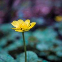 весна#насекомое#цветок :: Ани Хачатрян