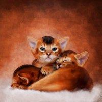 Абиссинские котята :: Ирина Kачевская
