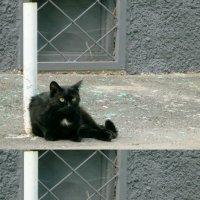 Кот, познающий дзен и нирвану) :: Lady Etoile