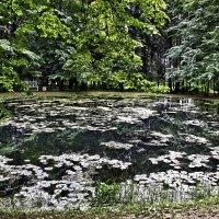 Есть в графском парке черный пруд :: Alexandr Zykov
